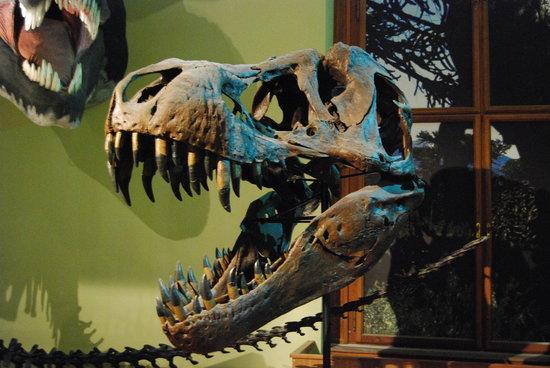 Museu de História Natural (Naturhistorisches Museum)