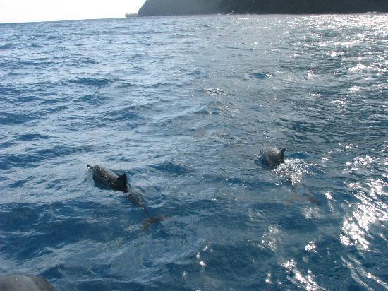Kilauea, Havaí: Dolphins! Thanks Captain Gary!