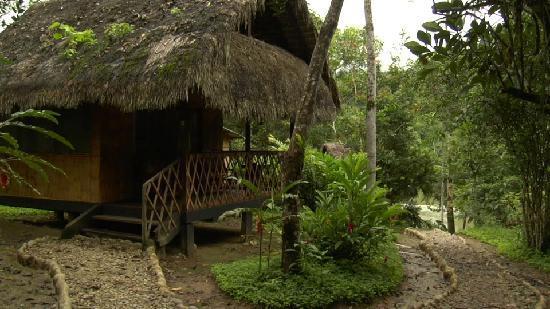 코토코차 아마존 로지 이미지