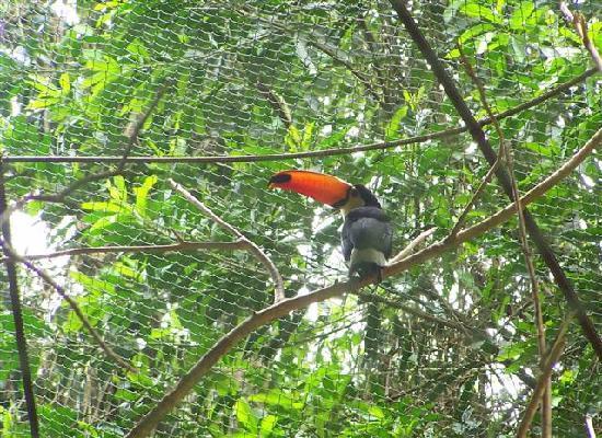 Güiráoga: A toucan