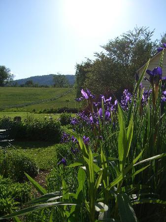 Washington, Вирджиния: The Garden