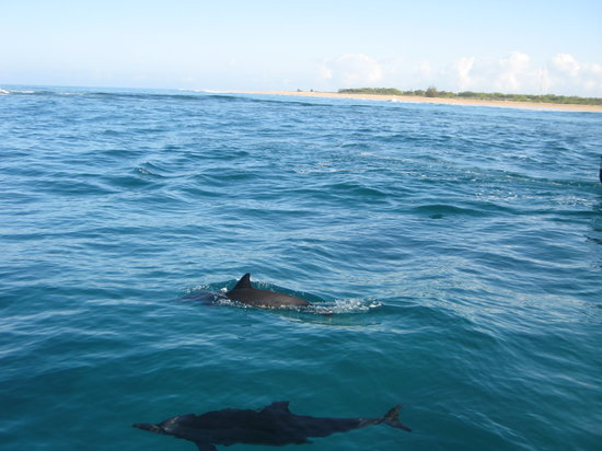 Capt Andy's Sailing Adventures: dolphins came very close