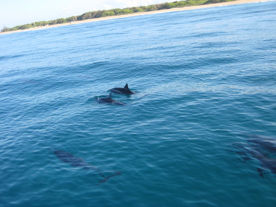 Captain Andy's Sailing Adventures: more dolphins