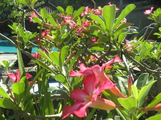 Bali Sandy Cottages: flowers in the garden
