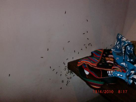 Koh Yao Yai Village: the flying bugs