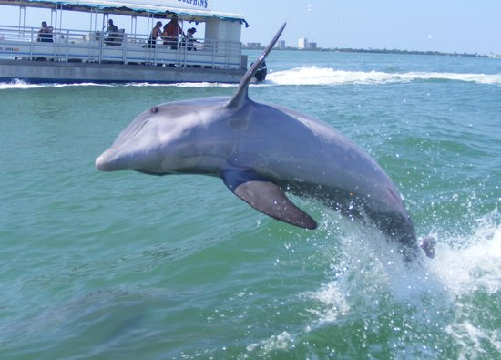 Little Toot Dolphin Adventures : ...Now he's just showing off!!
