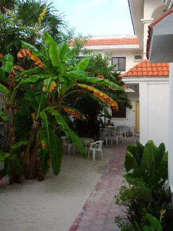 Maria Leticia Apartments : Courtyard