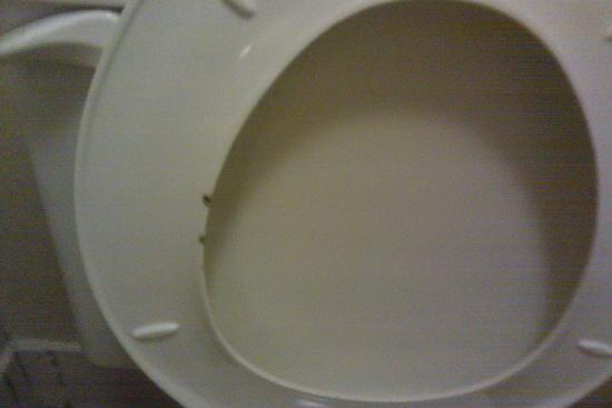 Super 8 Antioch/Nashville South East: Utterly filthy toilet seat.