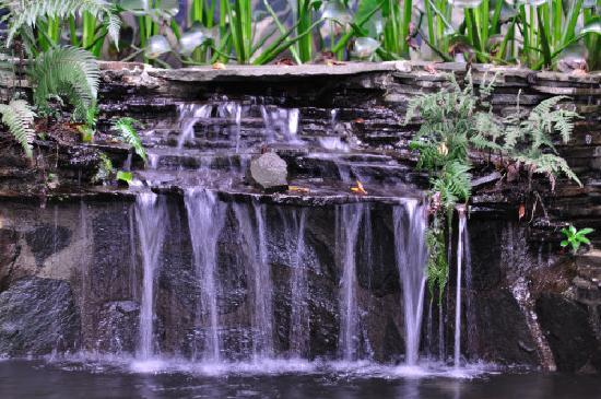 Hidden Canopy Treehouses Boutique Hotel: Lovely Waterfalls and Ponds