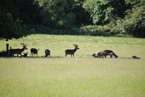 Arbutus Hotel: see the wild stag