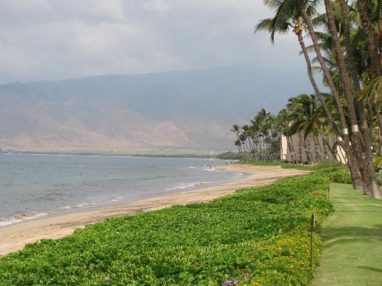 Maalaea Surf Resort: View of the beach facing north.