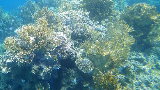 Neptune Boat: Prise de vue du bateau