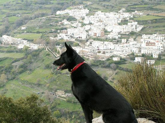 ‪‪Berchules‬, إسبانيا: Sammy the hotel dog surveys Berchules‬