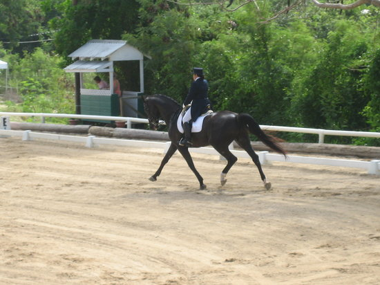 Saint Andrew Parish, Barbados: My Coach Riding Prix St. George
