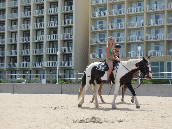 Fairfield Inn & Suites by Marriott Virginia Beach Oceanfront : HORSE RIDING/AUTO HORSEY CLEANUP...NO MESS ON BEACH!