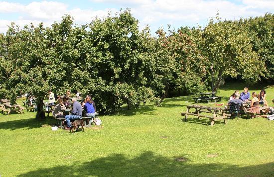 The Ship at Dunwich: The fantastic garden