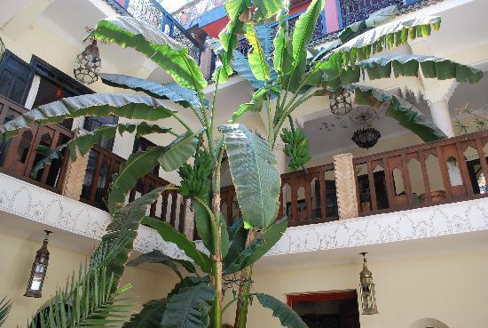 리야드 노마데스 호텔 사진