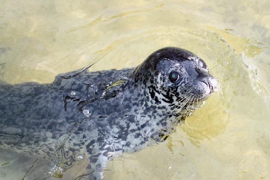 Otaru  Aquarium: でもまだ足りないという顔