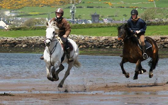 DINGLE HORSERIDING BITLESS ON THE BEACH