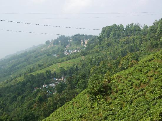 ‪‪Hotel Sonar Bangla - Darjeeling‬: Tea Estates in Darjeeling‬
