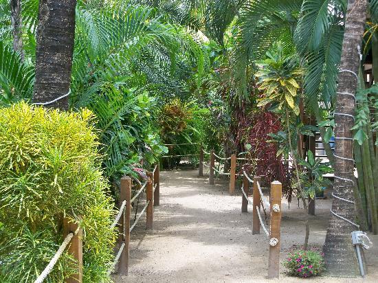 Bananarama Beach and Dive Resort: Grounds