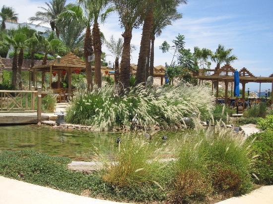The Royal Savoy Sharm El Sheikh: garden view