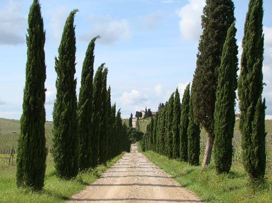 Castellina In Chianti, İtalya: Entering the Casale - with the apartments in the background