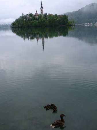 This is the definitive picture of Lake Bled, if I do say so myself