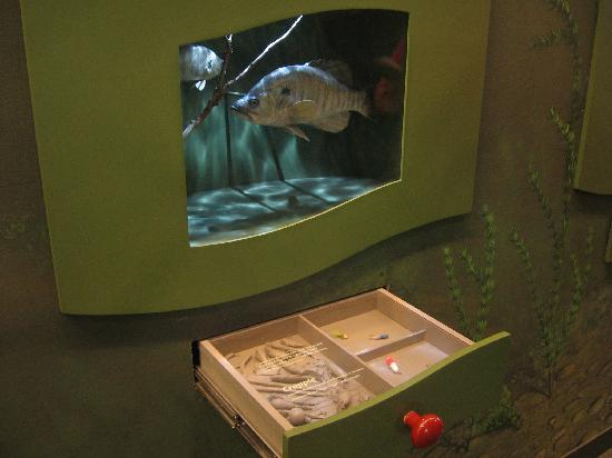 Cape Girardeau Conservation Nature Center: Crappie lure display.