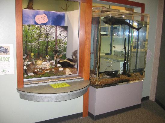 Cape Girardeau Conservation Nature Center: Aquarium and wildlife display.