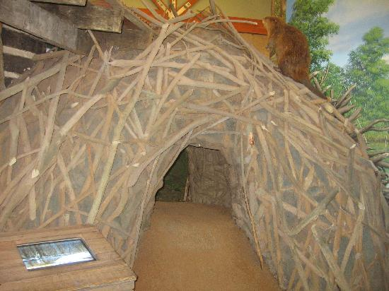 Cape Girardeau Conservation Nature Center : Big beaver house for kids to play around.