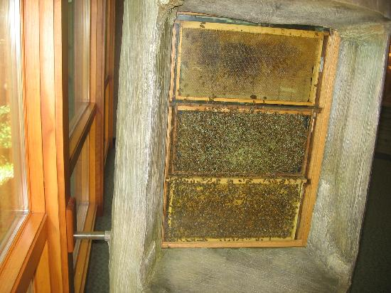 Cape Girardeau Conservation Nature Center : Indoor beehive, with tunnel for outside.