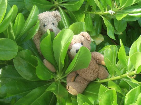 Lily Beach Resort & Spa: Local wildlife