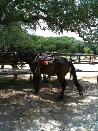 Rancho Cortez: horse