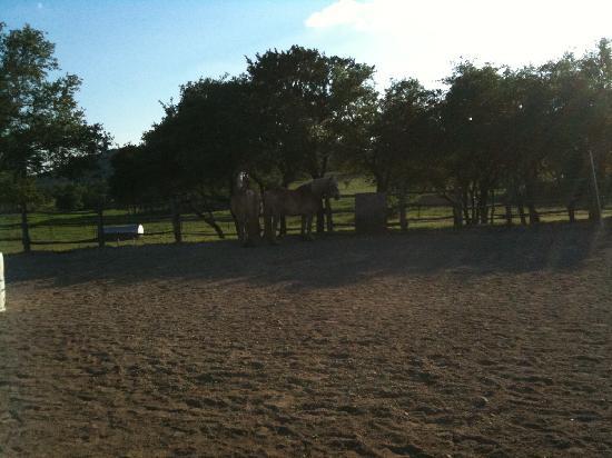 Rancho Cortez: horse3