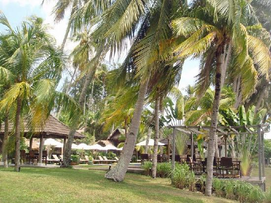 Bon Ton Resort: Bon Ton Coconut Trees