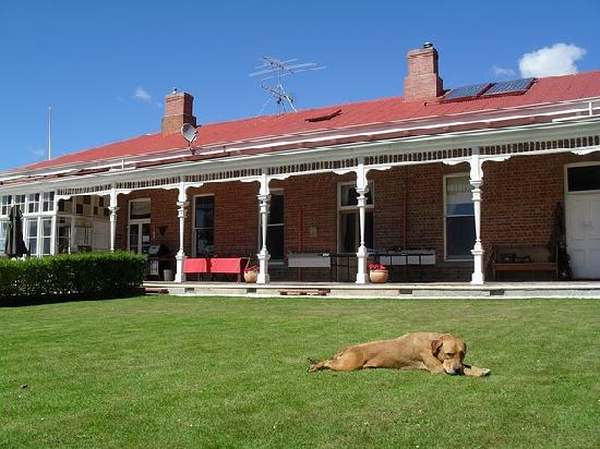 Ugbrooke Country Estate: Even the dogs are relaxed!