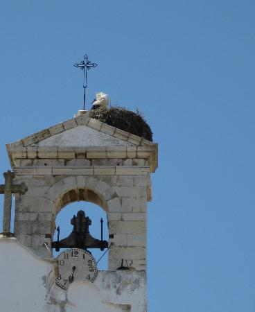 one of the storks of Faro