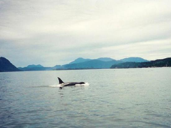 Campbell River, Canada: Whale Watching