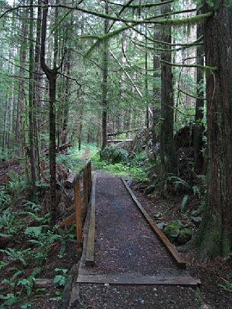 Campbell River, Canada : Hiking along one of the many trails in the rain forest