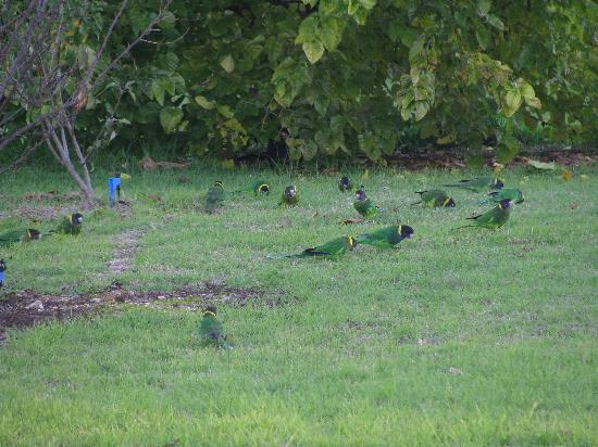 Big Brook Cottages: Parrots in the grounds