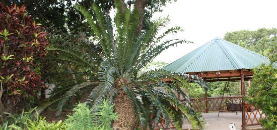 Bushbuck Lodge: Cycade and Gazebo