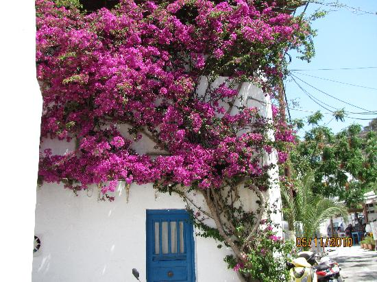 Mykonos-Stad, Griekenland: just one of the beautiful flower displays