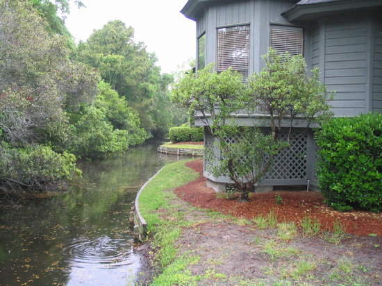 Port O'Call Shipyard Plantation: Gator in creek next to unit... yikes!