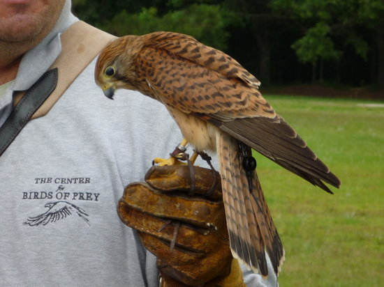 The Center For Birds Of Prey Awendaw 2020 All You Need To Know Before You Go With Photos Tripadvisor