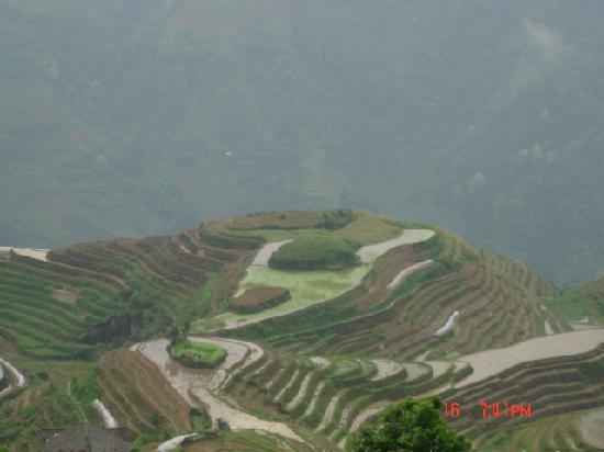 Long Ji One Hotel : rice terraces