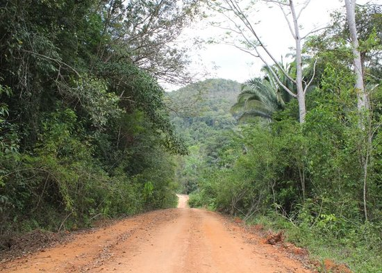 Mountain Pine Ridge Forest Reserve: Road through Mountain Pine Ridge