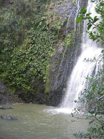 Bush and Beach: beautiful waterfall!