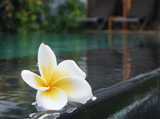 The Samaya Bali Seminyak: Private pool @ Royal Courtyard
