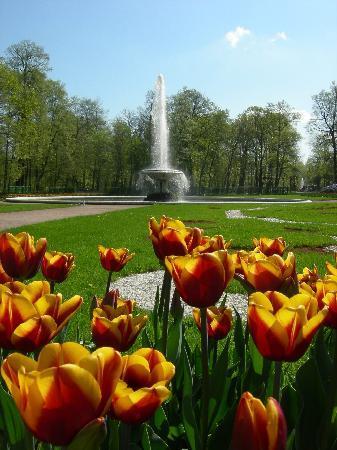 St. Petersburg, Russia: Peterhof gardens behind palace